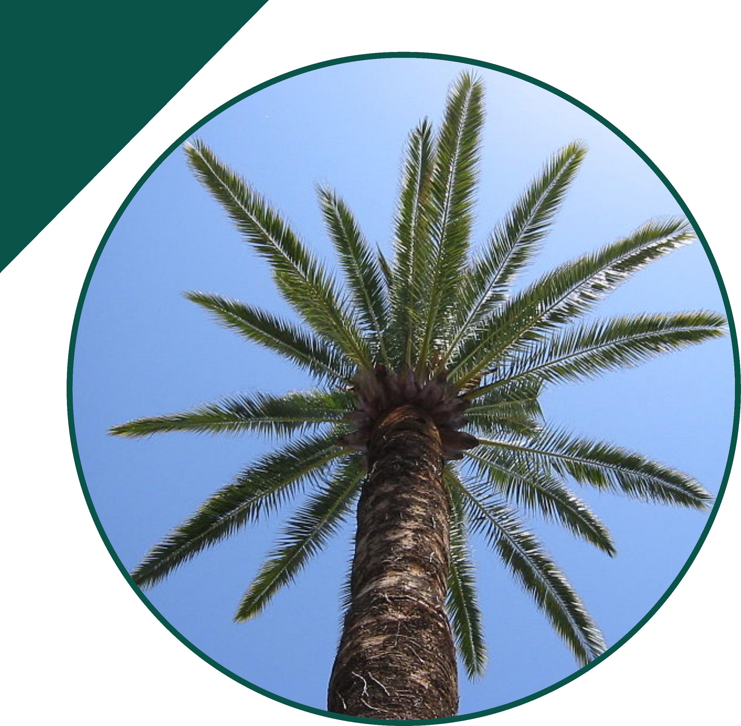 Palma Canaria