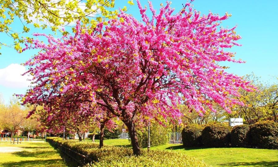 Top 10 rboles con flores parques alegres i a p for El arbol que no tiene hojas