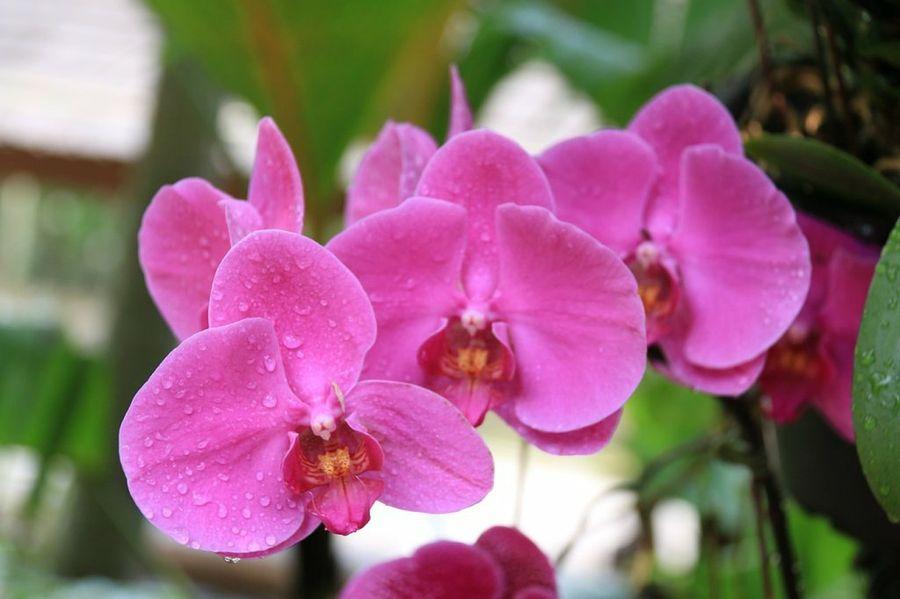 Top 10 arbustos con flores parques alegres i a p for Plantas ornamentales con flores