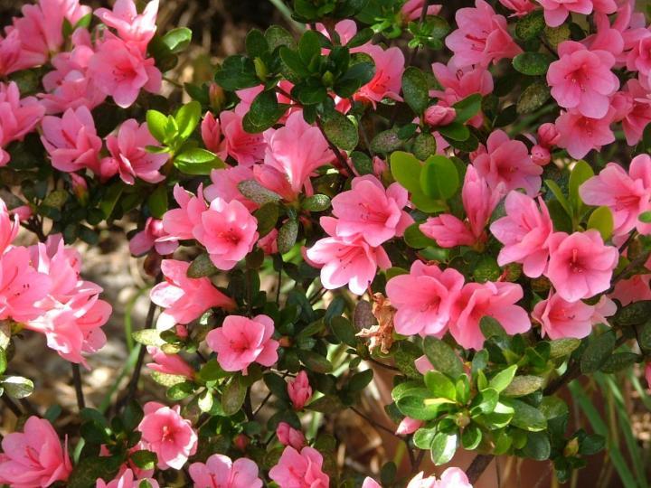 arbustos con flores