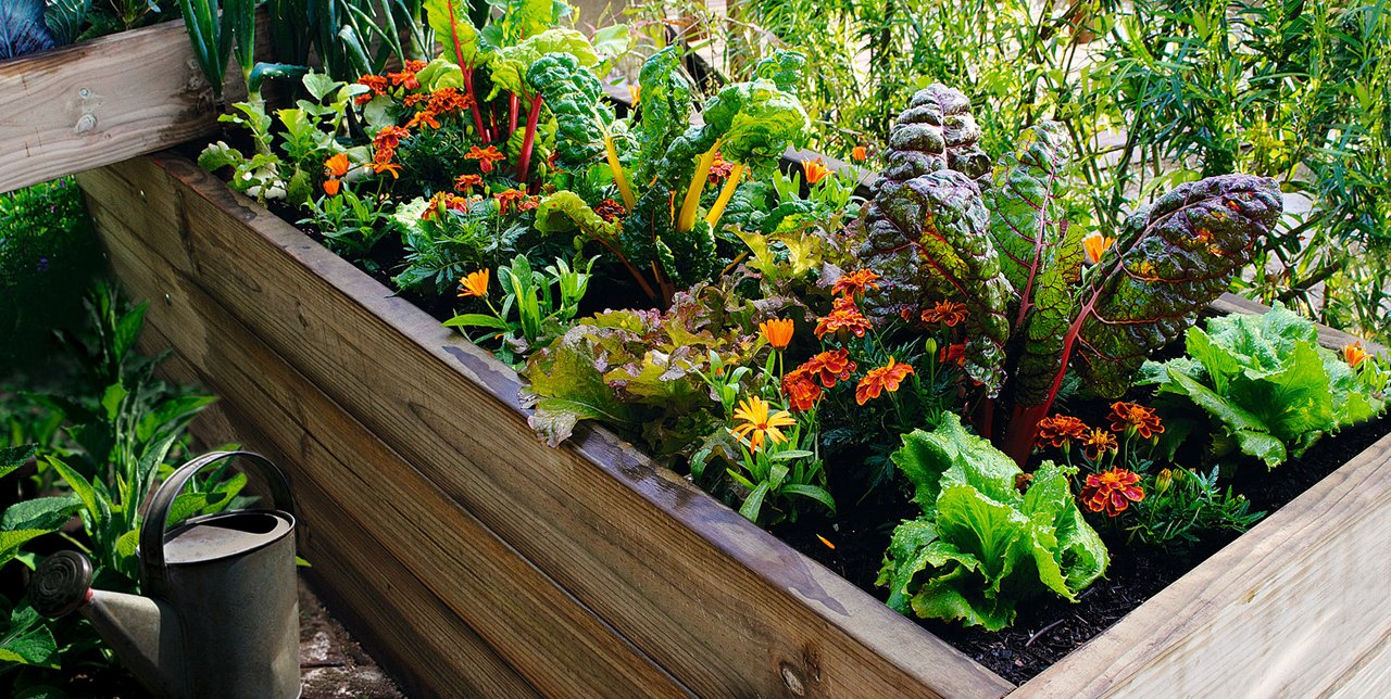 C mo hacer un huerto en casa parques alegres i a p - Como hacer un huerto en el jardin ...