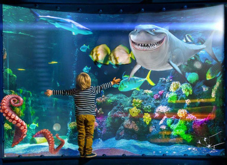 Conoce acuarios fabulosos en m xico parques alegres i a p for Acuarios para peces marinos