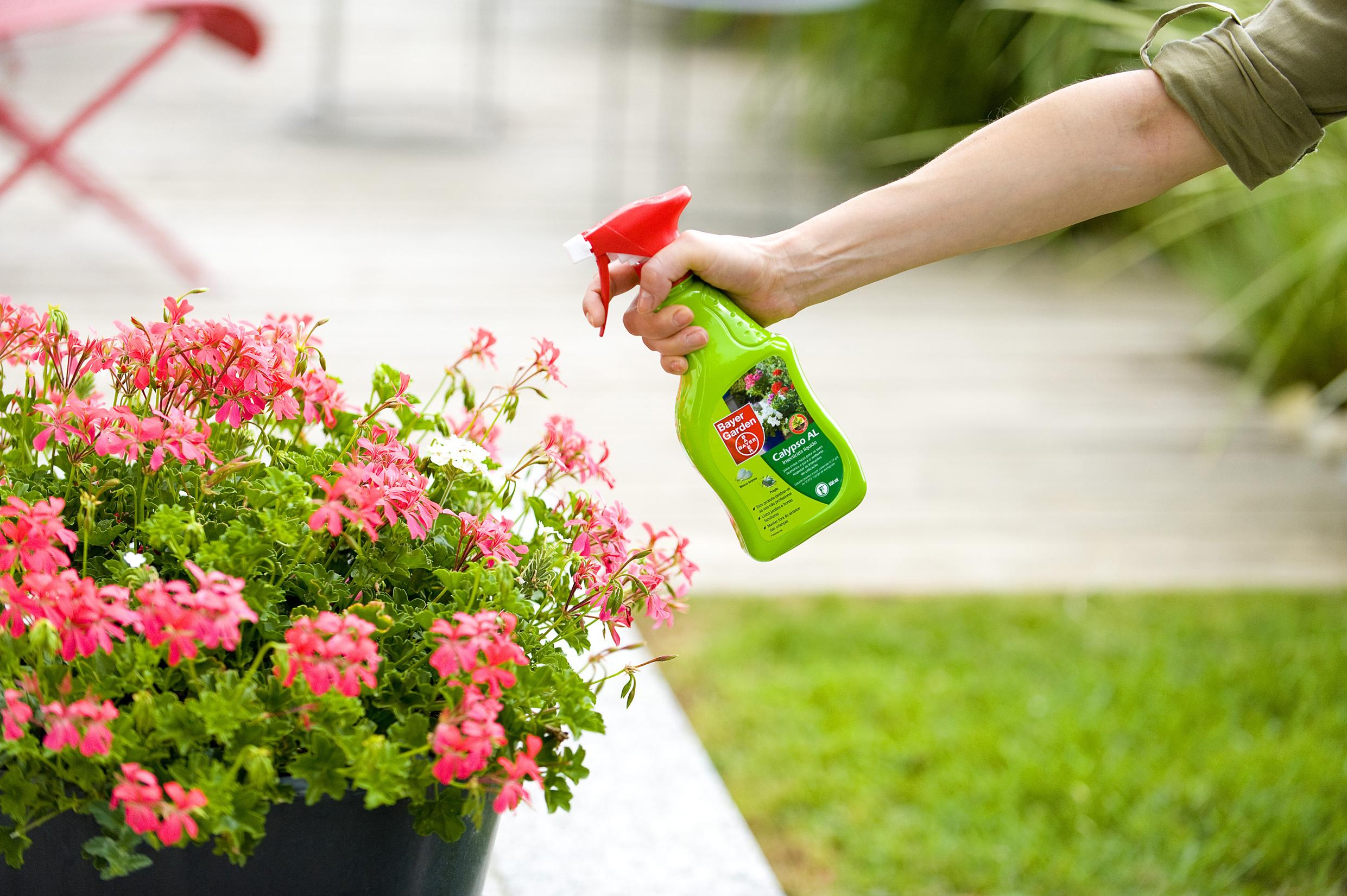 Cuidado de los jardines en temporada de lluvia parques alegres i a p - Cuidado de jardines ...
