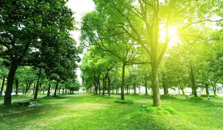 Importancia de plantar rboles parques alegres i a p for Medio en el que habitan los arboles