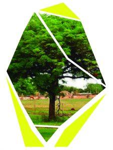 árbol de caoba diseño