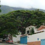 árbol de lluvia