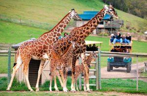 parques de animales