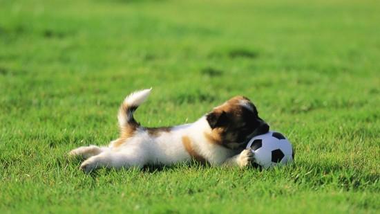 reglamento de mascotas