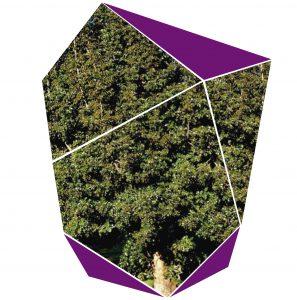 Árbol de Olivo Negro