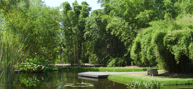 áreas verdes en Culiacán