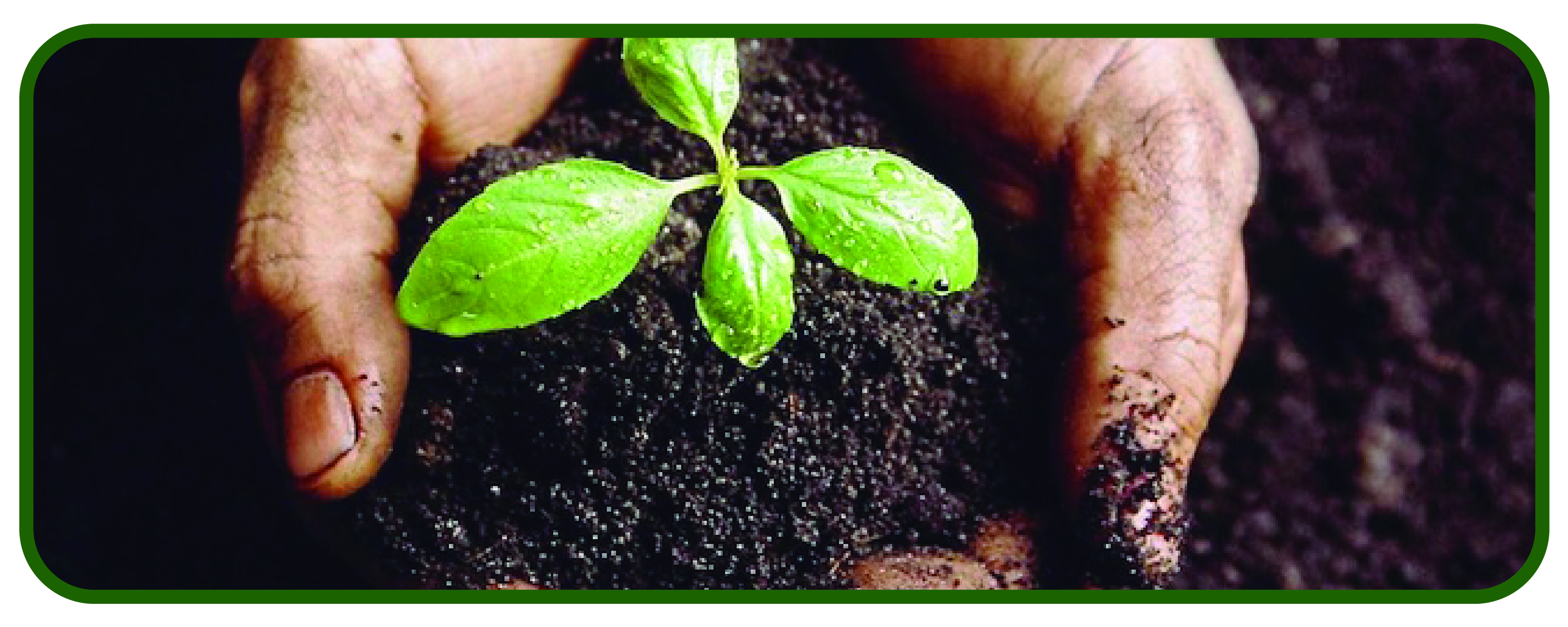 boton plantar