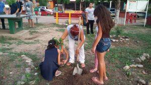 Volante voluntariado arborización
