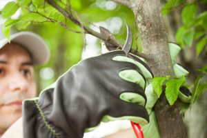 podar nuestros árboles