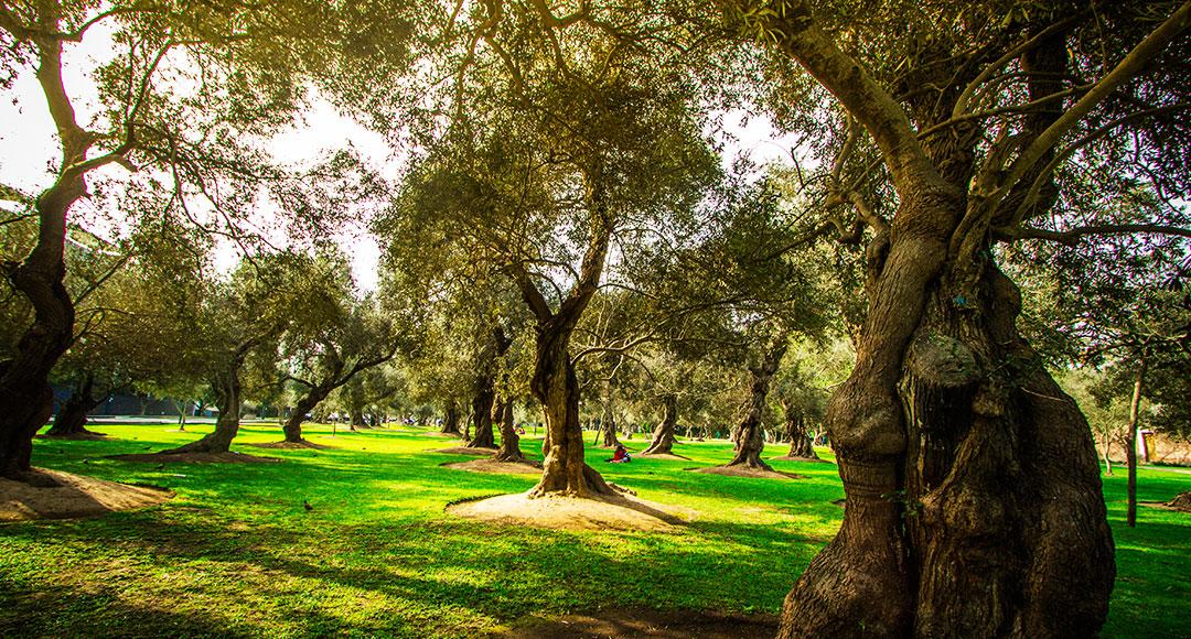 Mantenimiento en los parques y jardines parques alegres i a p - Mantenimiento parques y jardines ...