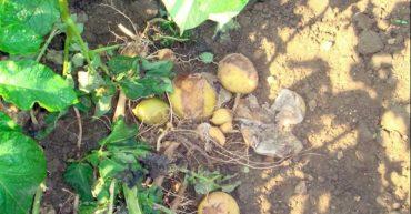 enfermedades en las plantas de mi huerto urbano