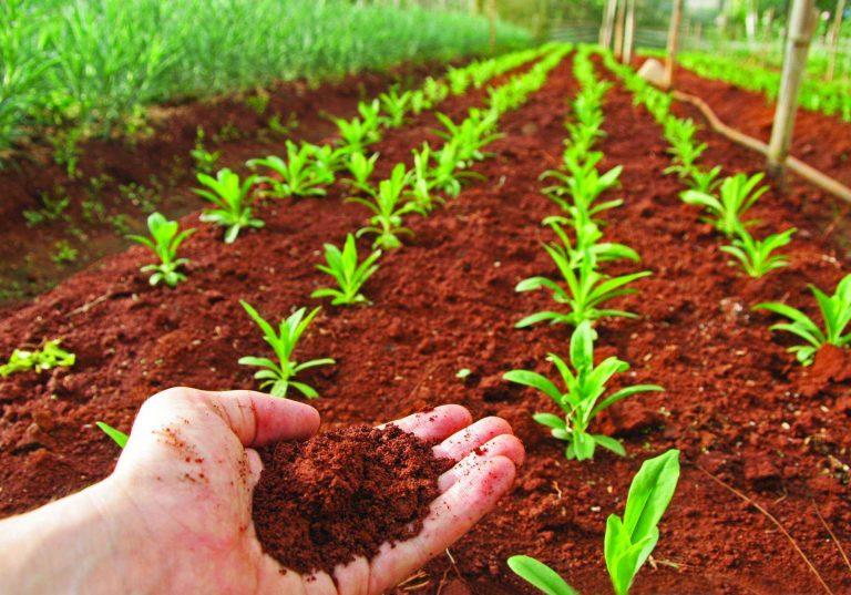Consejos para cuidar el suelo parques alegres i a p for Como abrillantar el suelo