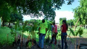 arborizaciones urbanas