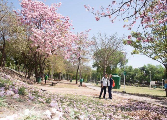 Árboles con flores para espacios públicos