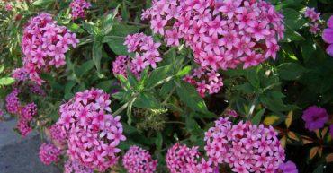 Plantas con flores