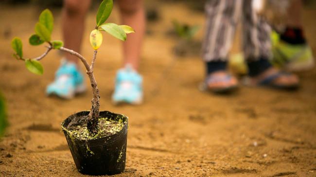 tips para plantar un árbol