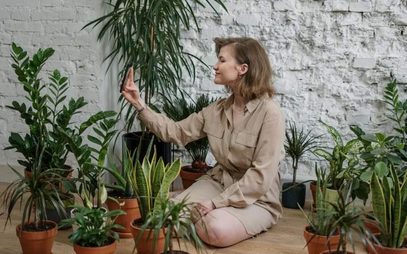 5 plantas que te ayudarán a refrescar tu casa