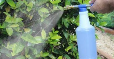 Repelentes caseros contra plagas
