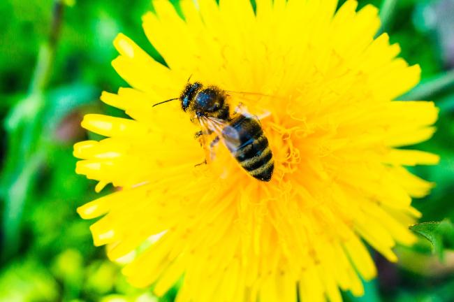 las-abejas