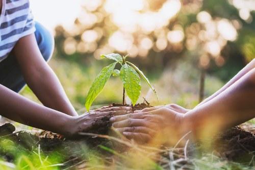 como plantar un arbol en 5 pasos