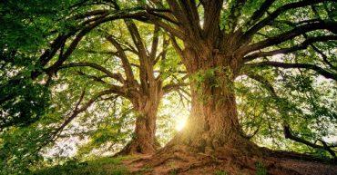 beneficio de los arboles al medio ambiente