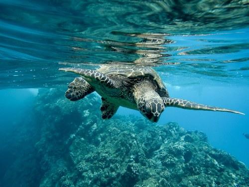 dia mundial de los oceanos