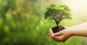 como hacer una arborizacion