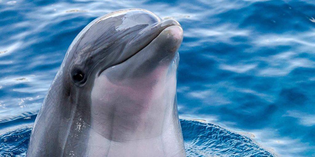 dia mundial de las ballenas y delfines