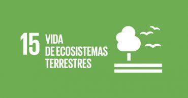 ods vida y ecosistema terrestre