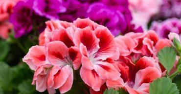 5 plantas que florecen todo el año