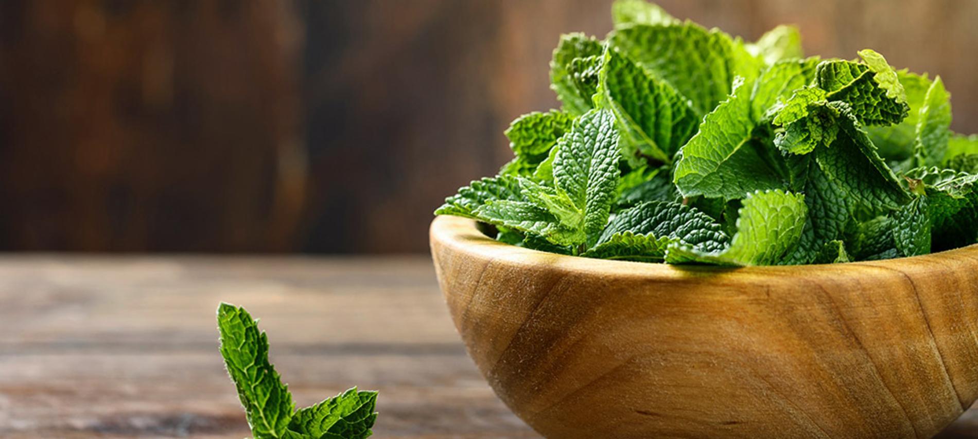 plantas aromaticas de interior