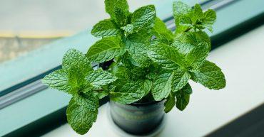 plantas que absorben la humedad