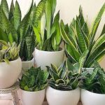 plantas que dan oxigeno de noche