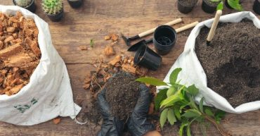 abono organico para plantas