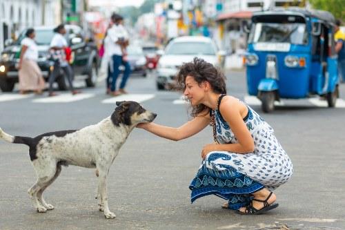 dia internacional del animal sin hogar