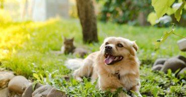 cuida a tus mascotas en verano