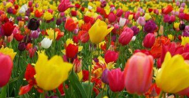 plantas con flores resistentes al sol