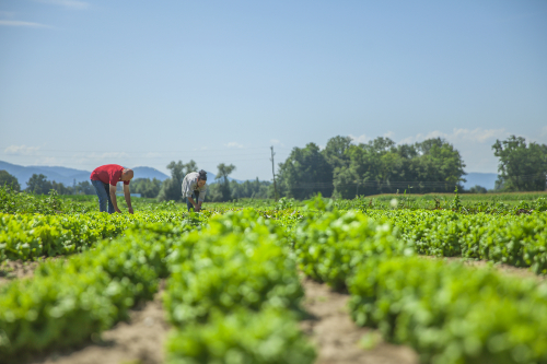 dia mundial de la agricultura