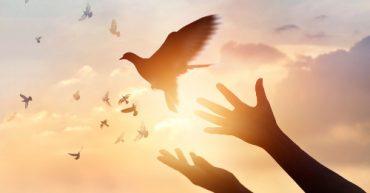 tipos de paz